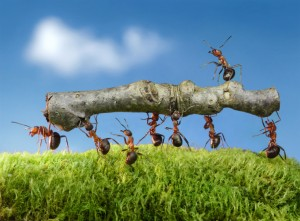 Ant Control-Pest Control Bournemouth