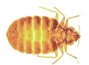 Bed Bugs Control Chilworth