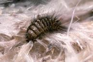 Carpet Beetle Control Bournemouth