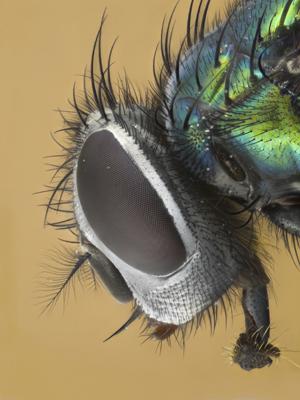 Pest Control-Pest Control Bournemouth