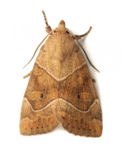 Moth Removal Wimbourne